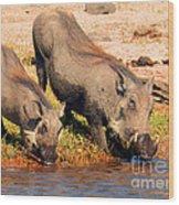 Warthog Family Wood Print