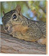 Wary Squirrel Wood Print