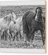 Wary Stallion Wood Print