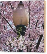 Washington Cherry Blossoms And A Lantern Wood Print
