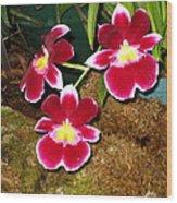 Washington Dc - Us Botanic Garden. - 121215 Wood Print