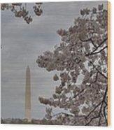 Washington Monument - Cherry Blossoms - Washington Dc - 011319 Wood Print by DC Photographer