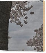 Washington Monument - Cherry Blossoms - Washington Dc - 011322 Wood Print by DC Photographer