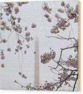 Washington Monument - Cherry Blossoms - Washington Dc - 011339 Wood Print