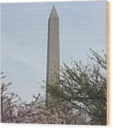 Washington Monument With Cherry Blossom Wood Print