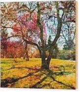 Washington Park I Wood Print