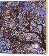 Washington Park Iv Wood Print