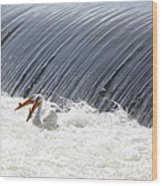 Washington White Pelicans Wood Print