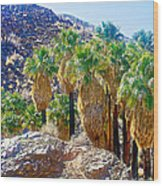Washingtonian Fan Palm Grove Along Lower Palm Canyon Trail Near Palm Springs-california  Wood Print