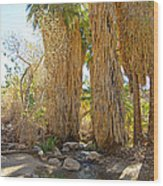 Washingtonian Fan Palms With Large Skirts In Andreas Canyon-ca Wood Print