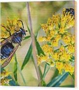Wasp 2 Wood Print