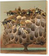 Wasp Hotel Wood Print