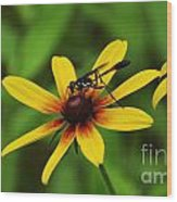 Wasp On A Susan Wood Print