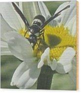 Wasp On Daisy Wood Print