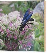 Wasp On Sedum Wood Print