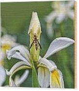 Wasp On White Iris Wood Print