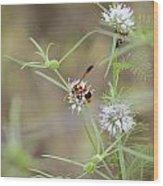 Wasp Variety Wood Print