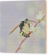 Wasp2 Wood Print