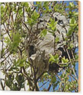 Wasps' Nest Wood Print