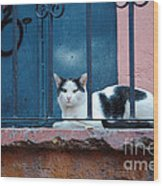 Watchful Cat, Mexico Wood Print
