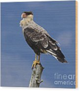 Watchful Eyes Crested Southern Caracara Wood Print