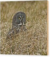 Watchful Eyes Of The Great Gray Owl Wood Print
