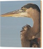 Watchful Heron Wood Print