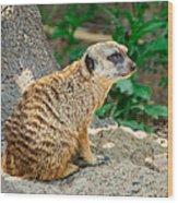 Watchful Meerkat Vertical Wood Print