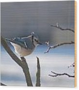 Watching For Food Wood Print