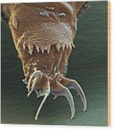 Water Bear Leg Wood Print