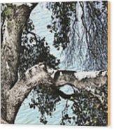 Water Beyond The Tree Wood Print