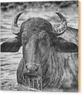 Water Buffalo-black And White Wood Print