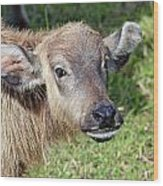 Water Buffalo Calf Wood Print
