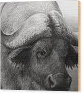 Water Buffalo Wood Print