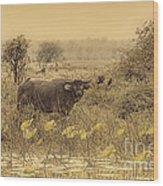 Water Buffaloes At Corroboree Billabong V2 Wood Print