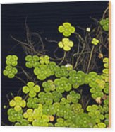 Water Clover Wood Print