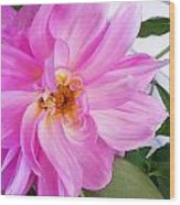 Water Color Dahlia Wood Print