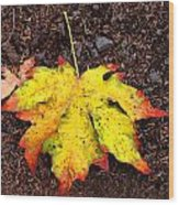Water Colored Leaf - Autumn Wood Print