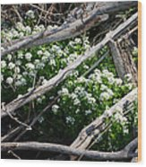 Water Cress Wood Print