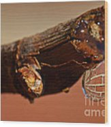 Water Drop On A Branch Wood Print