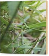 Water Droplet On Grass Blade Wood Print