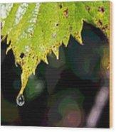 Water Droplet On Leaf Wood Print by Greg Thiemeyer