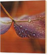 Water Droplets On Red Autumn Leaf Wood Print