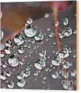 Water Drops On Cotinus Wood Print