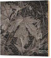 Water Drops On Fallen Leaves Wood Print
