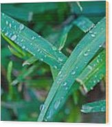 Water Drops On The  Grass 0004 Wood Print