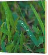 Water Drops On The  Grass 0011 Wood Print