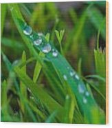 Water Drops On The  Grass 0014 Wood Print