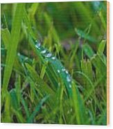 Water Drops On The  Grass 0016 Wood Print