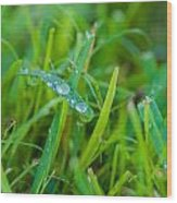 Water Drops On The  Grass 0018 Wood Print